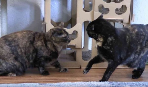 戦闘態勢のサビ猫1、2
