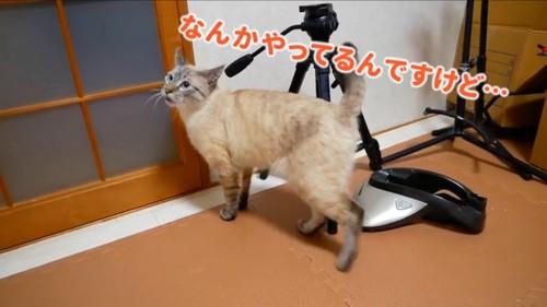 ソワソワする猫