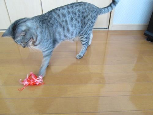 おもちゃで遊ぶ愛猫