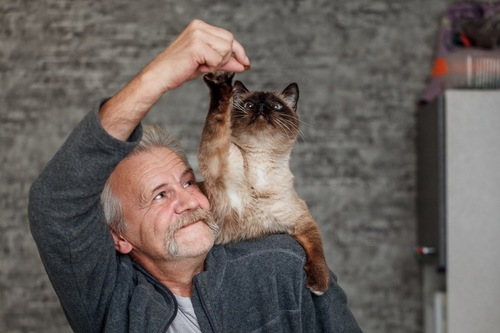老人男性と猫