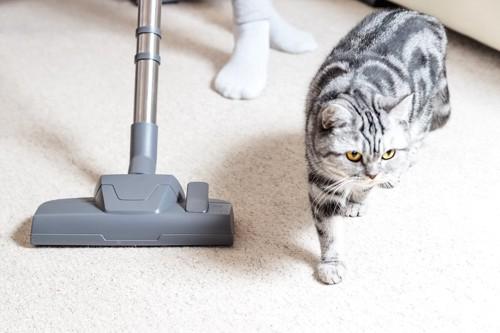 カーペットに掃除機をかけている人とそばを歩く猫