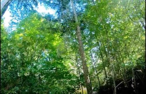 シンバが立ち往生する木