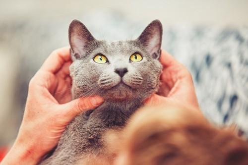 猫の顔を触っている飼い主
