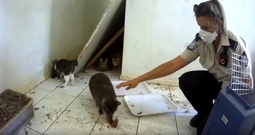 猫にエサを与える女性