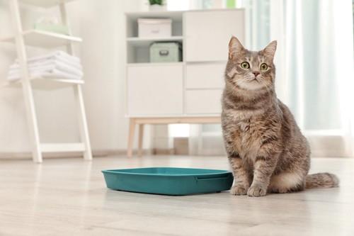 猫トイレと猫
