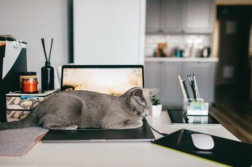 キーボードの上で寝る灰色の猫