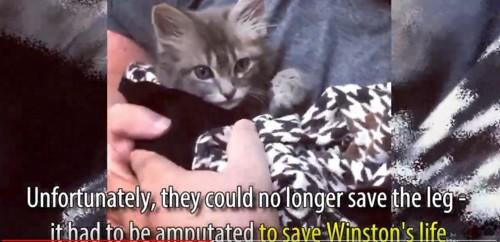 毛布に包まれ抱っこされる猫
