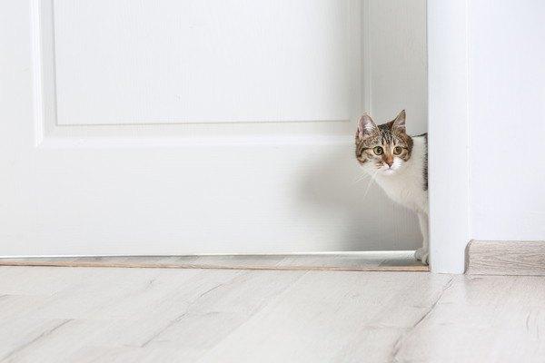 扉から辺りをうかがう猫