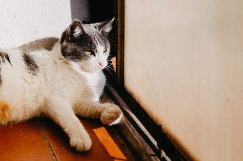 猫の悪巧み