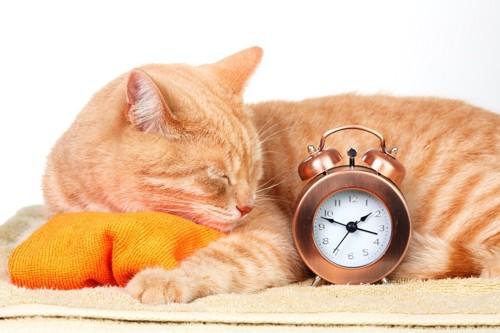 眠る猫と目覚まし時計
