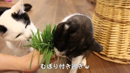 白黒の2匹の猫