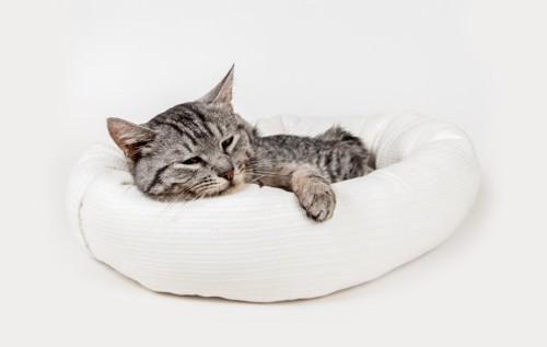 ベッドでまどろむ猫