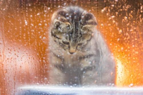 雨の窓際で座る猫