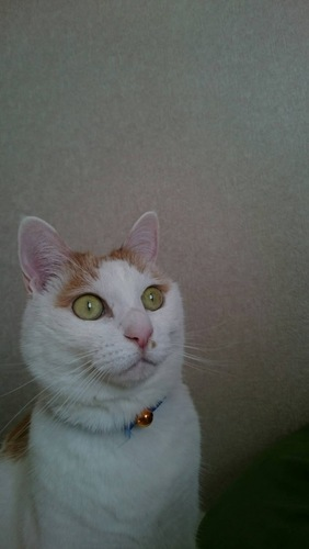 愛猫の健康は飼い主全員の共通の願いですね