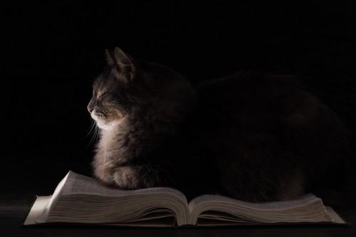 暗闇のなかで本に手をかける猫