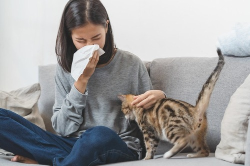 くしゃみをする人と猫