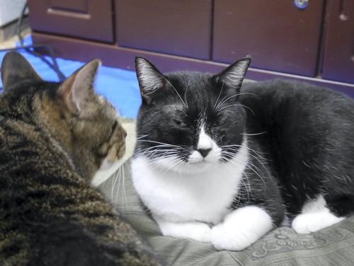 猫に近づかれて嫌そうな顔をする白黒の猫