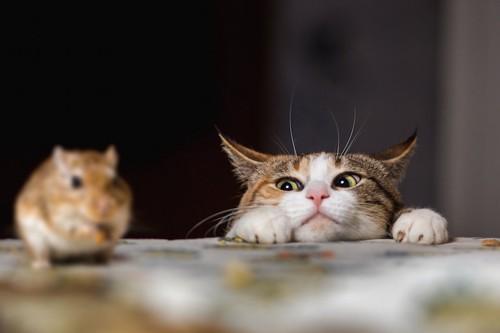 テーブルの上のネズミを狙っている猫