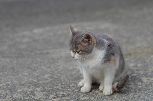 落ちこむ猫