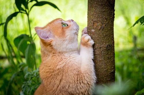 木の幹で爪とぎをする猫