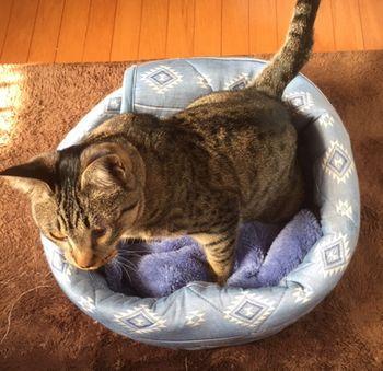 猫がベッドの中に入っている