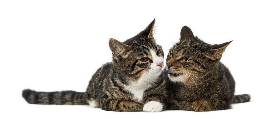 会話をするような猫達