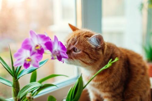 鼻の匂いを嗅いでいる猫