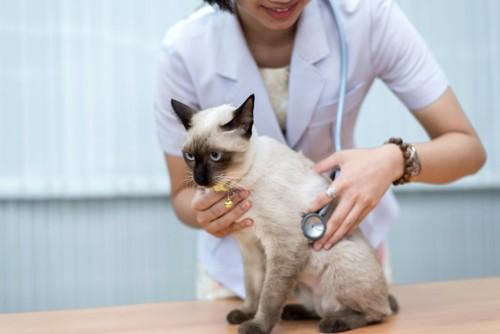 病院で獣医師に診察される猫