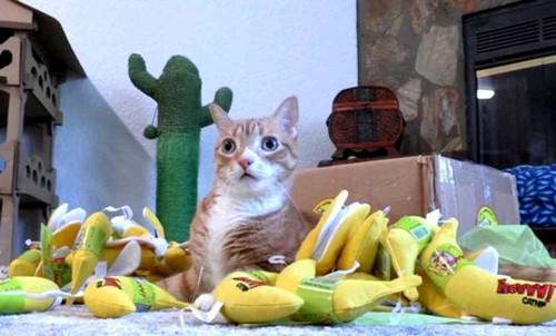 バナナのおもちゃの上に座るチャトラ猫