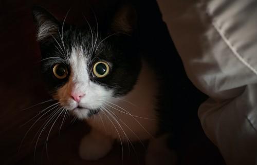 物陰に隠れて不安げな猫