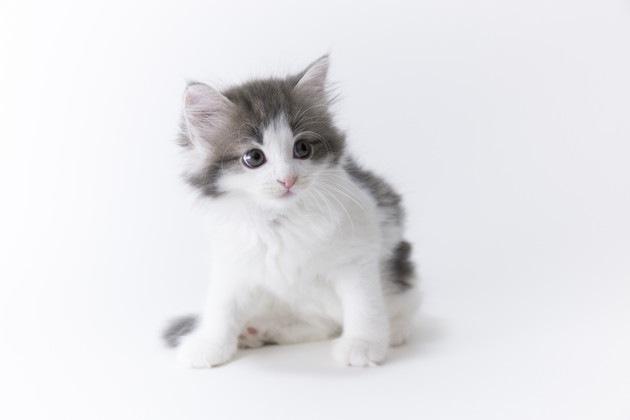 長瀬智也が飼っていそうな猫