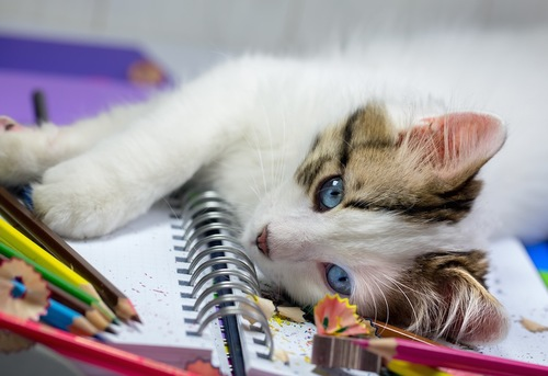 文房具の上で横になる猫