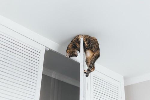 クローゼットのドアに登る猫