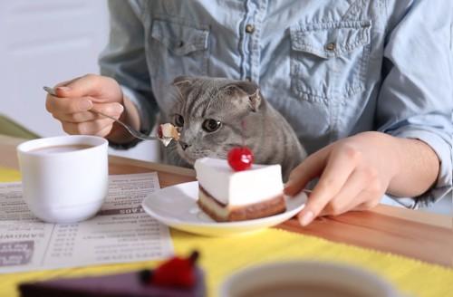 飼い主の食べているケーキを欲しがる猫