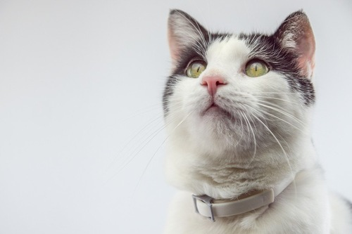 キリッとしている猫