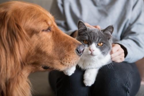 猫を抱く人と犬