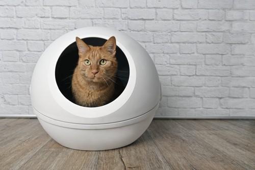 猫用トイレから顔を出す猫