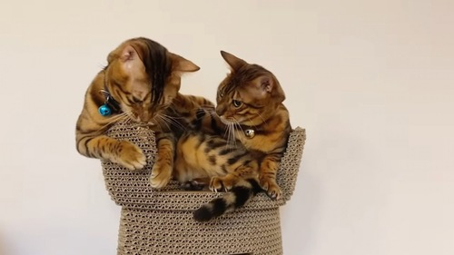 青い鈴の猫に前足をかける猫