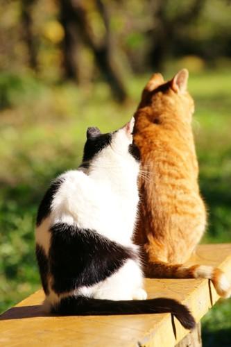 くっついている2匹の猫