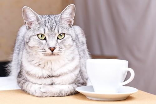 白いティーカップの横でこちらを見ている猫