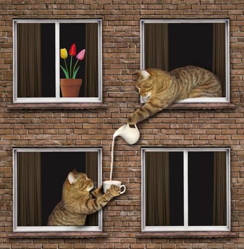 屋外でDIYした二階建ての家から顔を出す二匹の猫