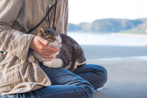 膝の上に乗りながら撫でられる猫