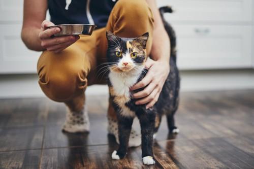 ごはん皿を持つ人と猫