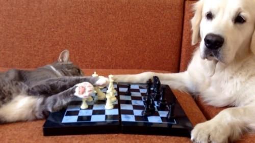 猫と犬でチェス