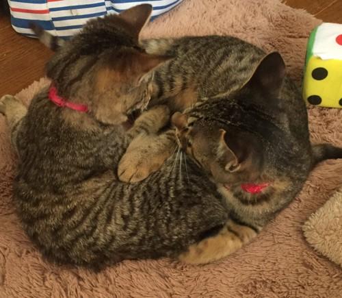 2匹で一緒に寝ている猫