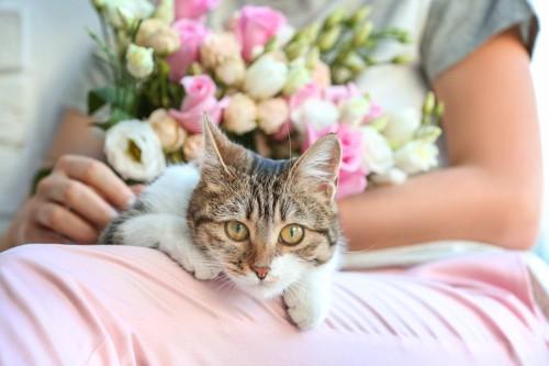 花を抱いた人の膝に乗る猫