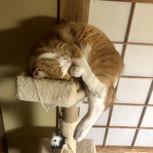 変な寝相で寝る猫