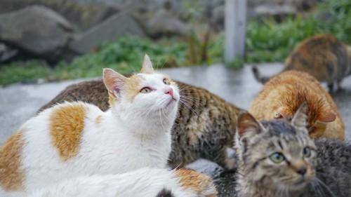 猫島の猫たち