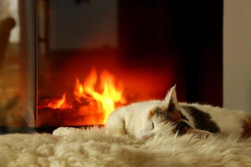 暖炉の火にあたっている猫