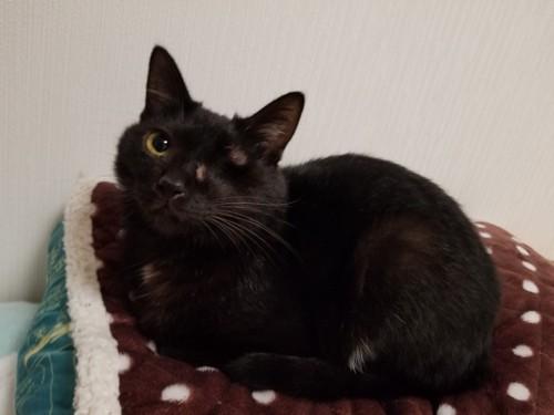 枕の上の猫